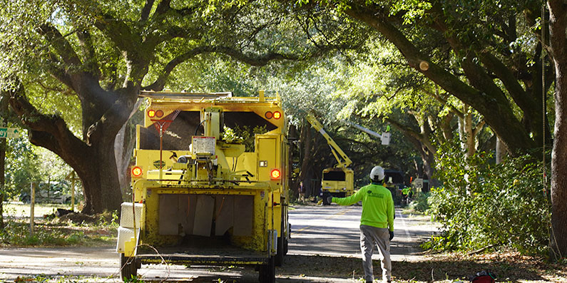 Preserving Aiken's Trees For Future Generations With a Public-Private Initiative
