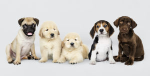 PUPPY CLASS (AKA S.T.A.R. PUPPY PROGRAM) @ Weeks Center, Rooms 1 & 2